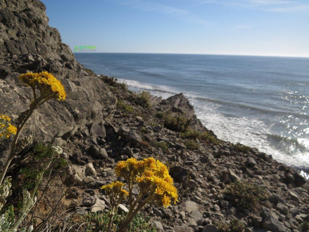 Geology in Cabo Mondego cliffs