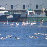 Indústria Pesqueira vs Aves na Ria de Aveiro