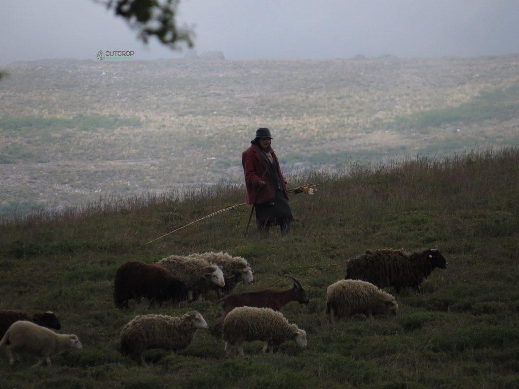 Serra da Freita Shepherds, ancient practice