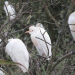 Observação de Aves na cidade de Aveiro