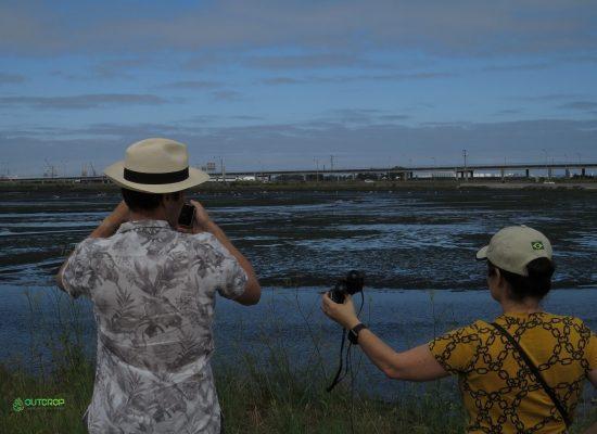 Birdwatching Aveiro com a Outcrop