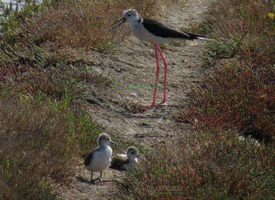 Observação de Aves Aveiro
