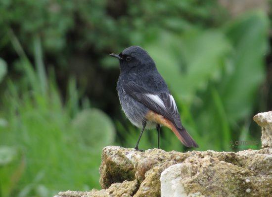 Observação de aves Serra da Freita