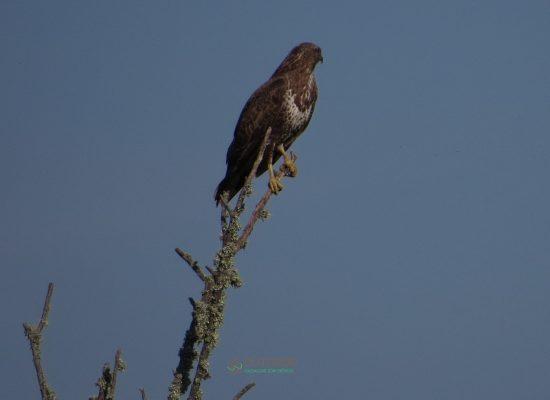 Birdwatching Aveiro