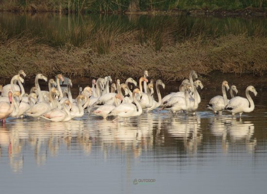 Flamingos Aveiro