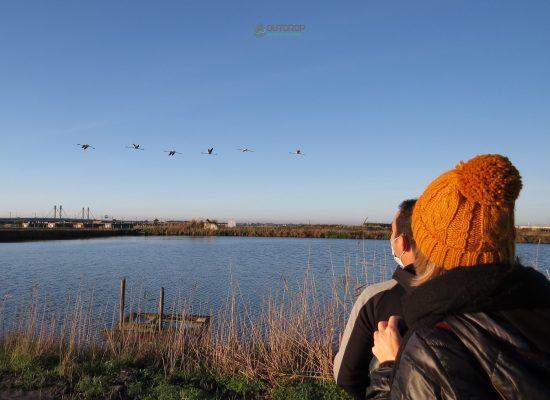 Birdwatching Outcrop Aveiro