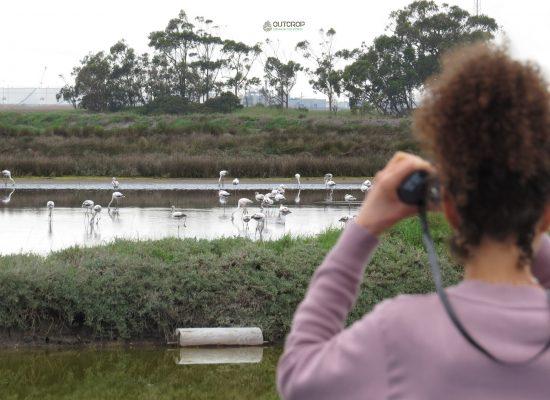 OUTCROP Observação de Aves Aveiro