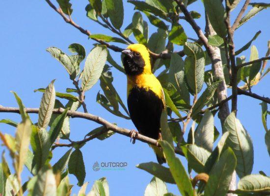 Arcebispo Birdwatching Aveiro with OUTCROP